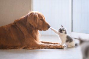 Este CBD sigur pentru câini și pisici